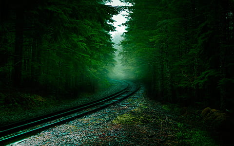 rail road between forest photography