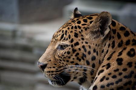 macro shot photography of leopard