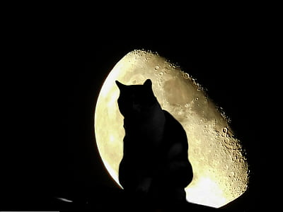 silhouette photo of cat