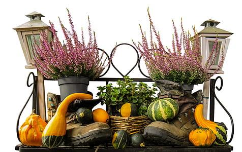 photo of squash vegetables