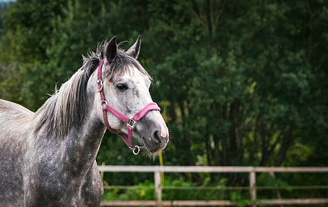 selective focus photography of white and gray horse