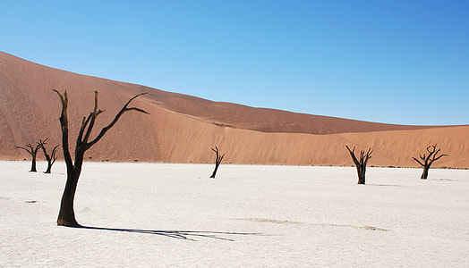 brown dry trees on desert during daytime