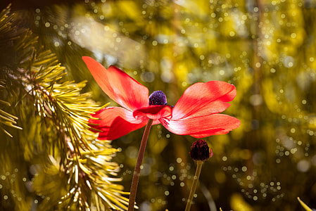 bokeh photography of red petaled flower