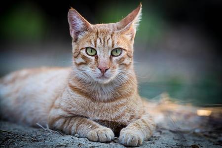 orange tabby cat on gray pavement