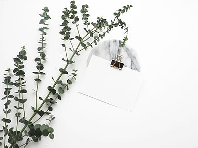 green leaf plant near white paper with black clip