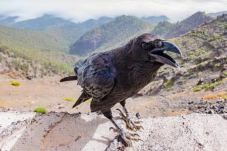 black bird on beige surface