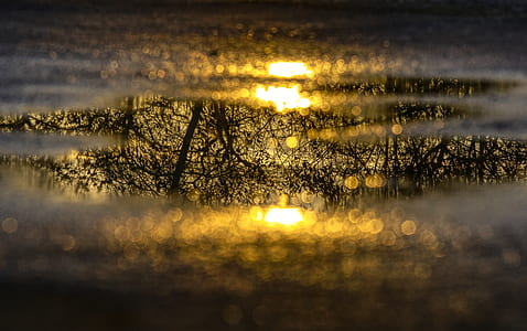 water puddle, mirroring, reflection, tree, aesthetic, puddle photography