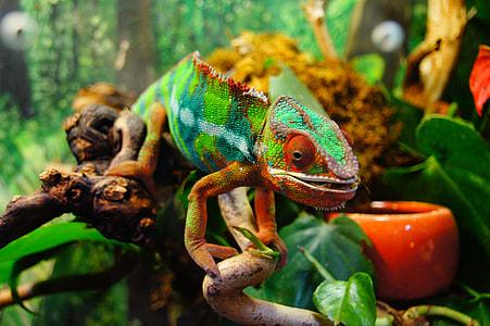 closeup photo of green and white iguana