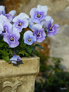 selective focus photo of white and purple petaled flowers