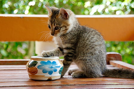 grey kitten near ceramic vase on brown wooden table