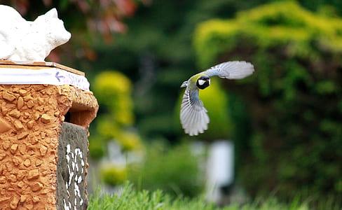 bird on flight photo