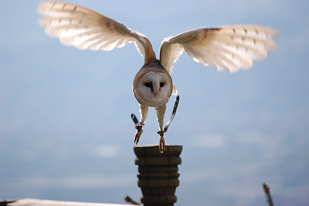 white barn owl flying over brown house during daytime