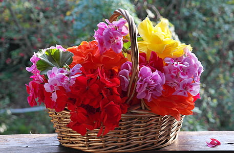 wicker brown basket with red, purple, and yellow flowers
