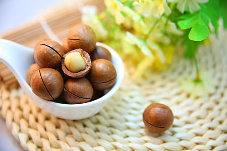 bunch of macadamia seeds