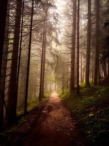 dirt road in between pine trees