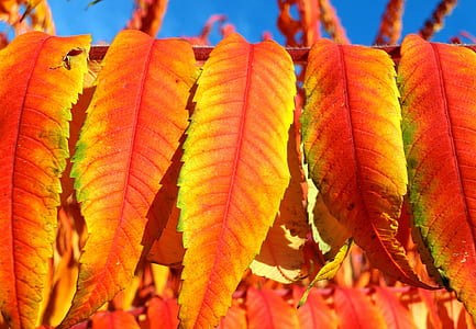 photo of yellow and orange leaves