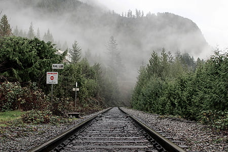 empty train rails against trees