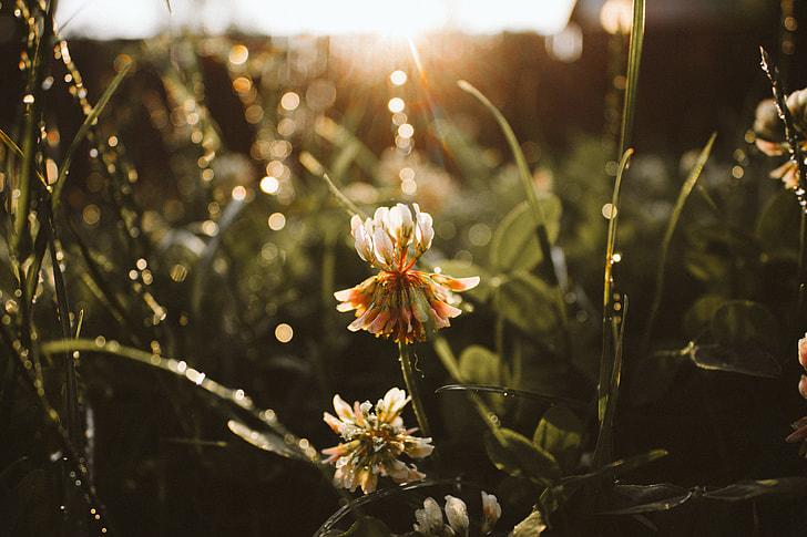 selective focus photography of orange clover flower