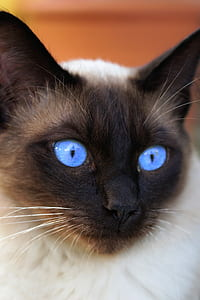 short-coated black and white cat