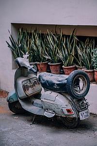 grey motor scooter parked near snake plants at daytime