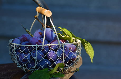 grapes on gray metal basket