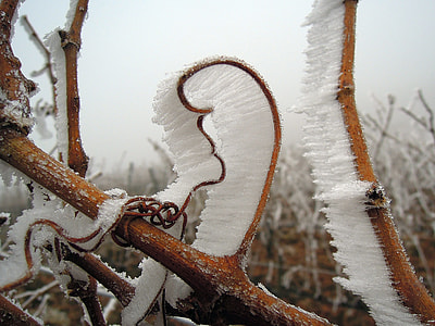 photo of frosted stem