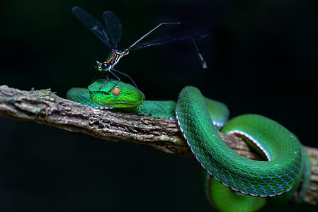 photography of black dragon fly on green snake