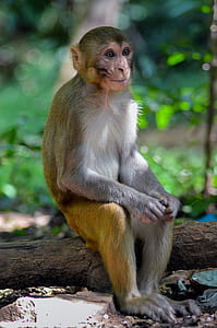 brown monkey sitting on tree branch