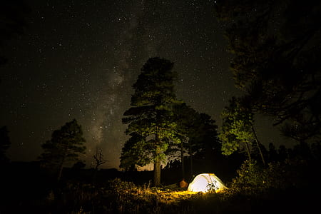 white tent on forest during nighttime
