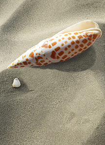 seashell on sand dunes