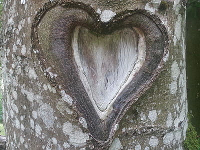 brown tree trunk with heart cutout close up photo