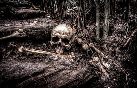 human skull on brown soil