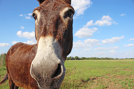 brown donkey standing