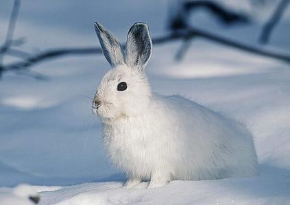 white rabbit stands on snow field