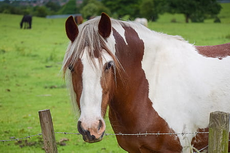 closeup photo of white and brown horse