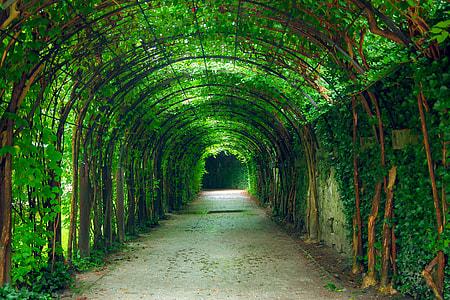 green leaved arc hallway