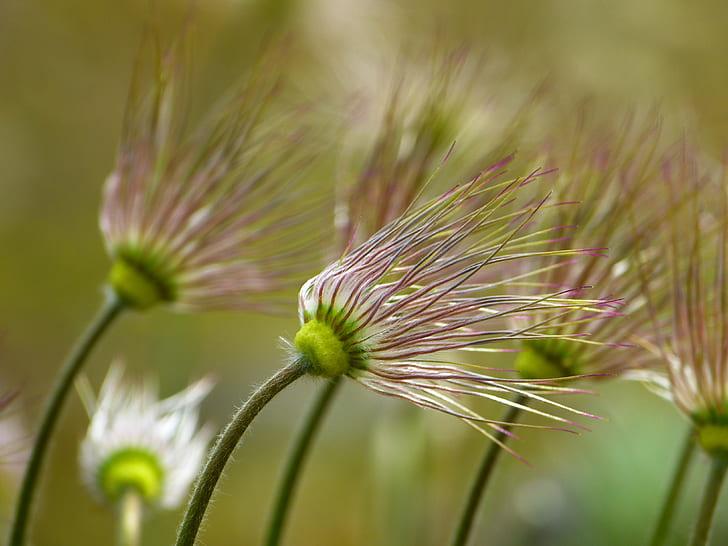 close up photo of white dandelion plant