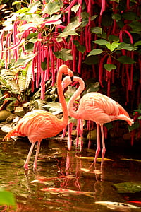 two pink flamingos near chenille plant