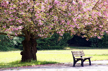 brown wooden bench near trees with pink leaves