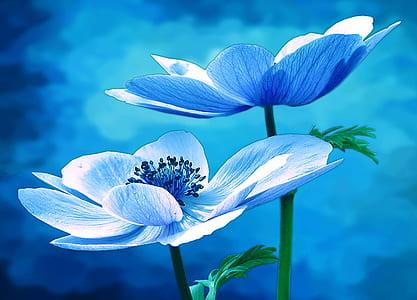 two blue petaled flowers