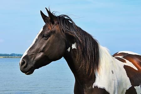 black and white horse near on seashorre