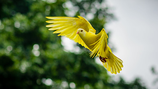 shallow photography of a yellow pigeon