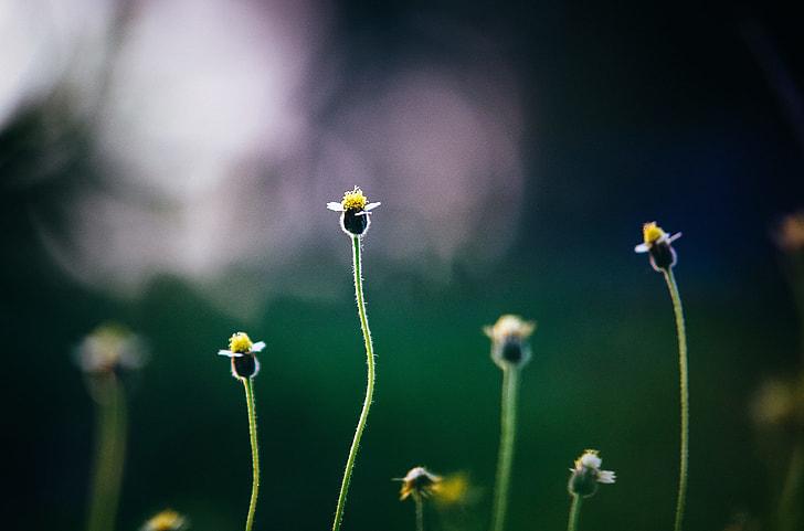 Flowers Growing Garden