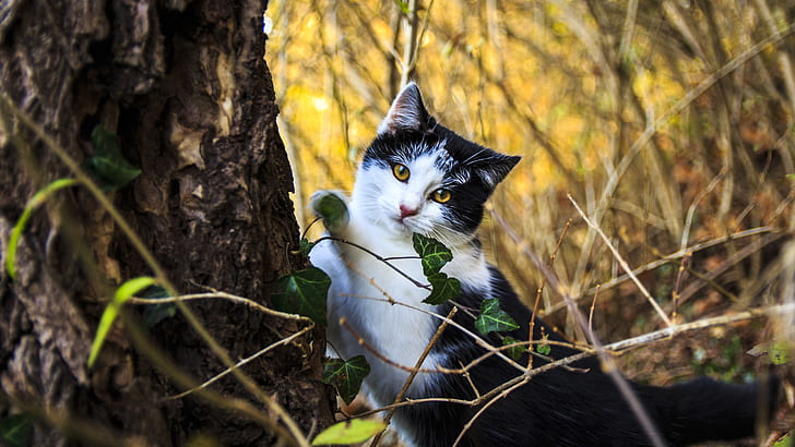 selective photography of bi-color cat beside browen tree
