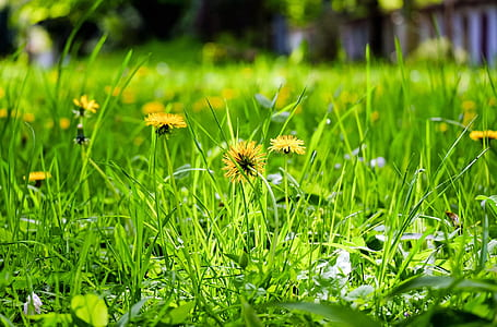 yellow petaled flowers at daytime