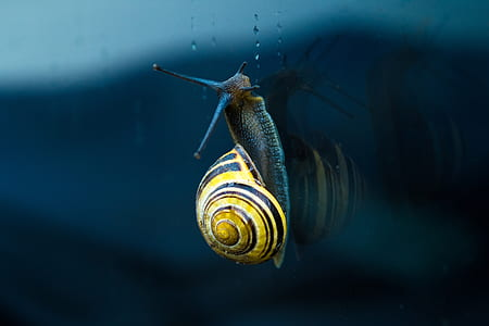 brown and black snail