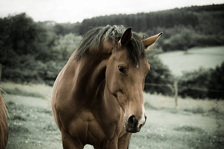 brown horse near body of water
