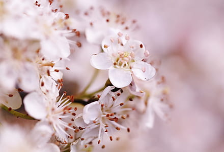 bokeh photography of white blossoms