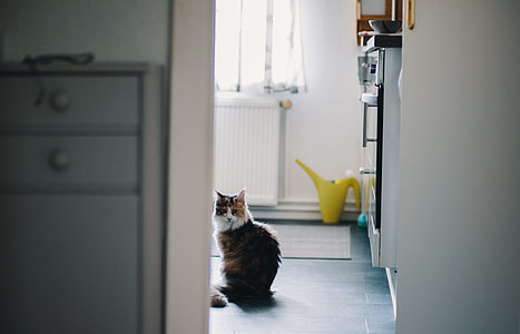 brown and white fur cat near refrigerator