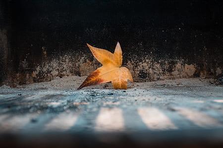 orange leaf on ground